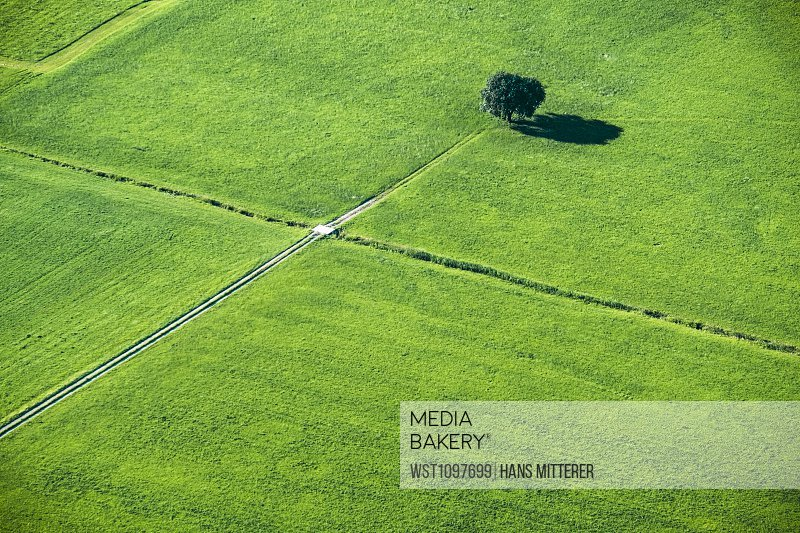 Austria, Salzburg State, meadows